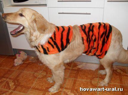 Мама, а у меня зубки похожи на тигриные?