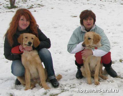 Наши рыжики - Абсолют и Аврора :-)