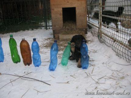 Бобр Веня