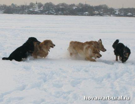 Радость, снег, друзья