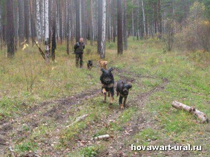 Вылазка ховавартов в лес!