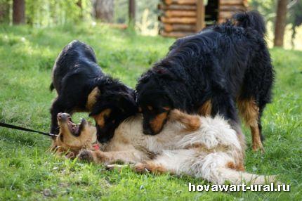 Варя, Беня и Акунин