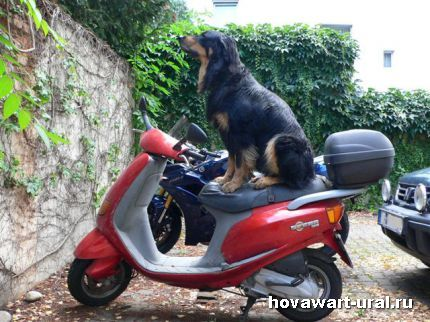 Мотоциклист!