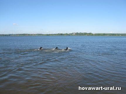 Ушли в дальнее плавание