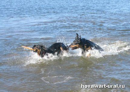 Водные страсти :-)