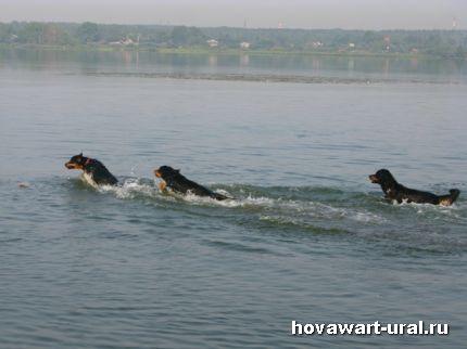 Наши пловцы