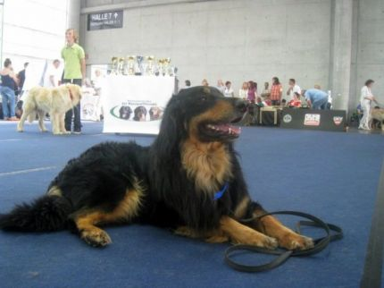 Акелло на World Dog Show 2012