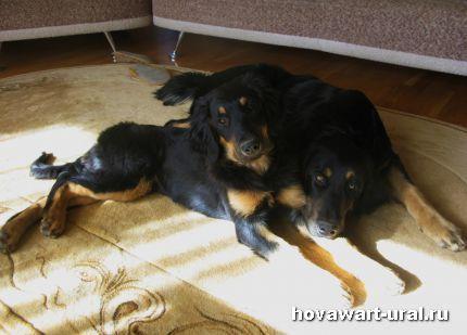 Сладкие хови-моськи Макар и Рика