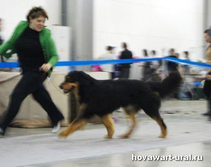 Анри на Евразии 2011 - 2