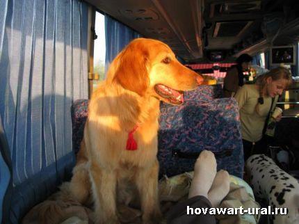 Лежбище в автобусе