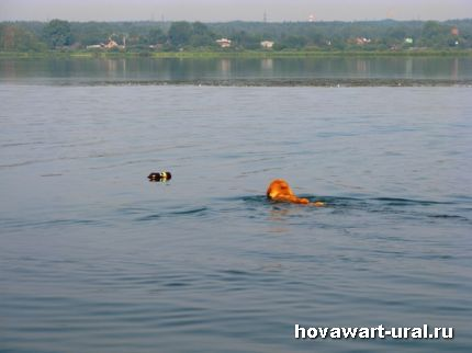 Пловчиха Анечка