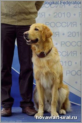 Россия - 2010. Абрикос