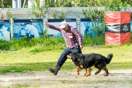 Гринго на соревнованиях по IPO-1 в Екатеринбурге