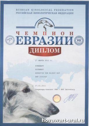 Гринго - Чемпион Евразии!