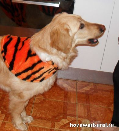 Варя репетирует тигриное рычание