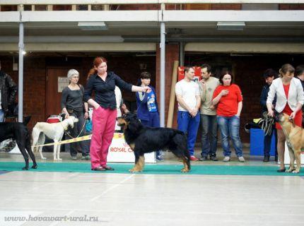 Гринго - BIG-3 на Чемпионате РКФ!