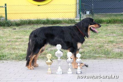Дортмунд 2011 Рикуся - звезда!