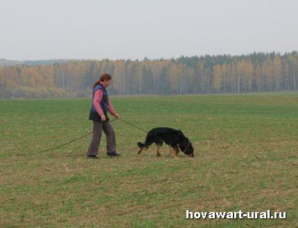 Рикуся работает по диагонали борозд на поле!