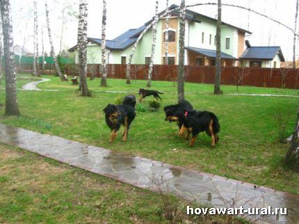 Хови-дурилки