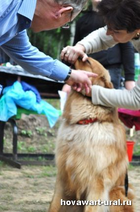 Тестирование щенка. Арон. 1