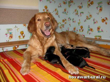 Мамочка Анечка и ее детки :-)