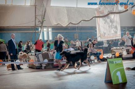 Брюс. Чемпионат Клуба Ховавартов Украины, Харьков 2012