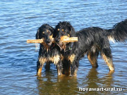 Рика и Гриня - мокрая парочка :-)