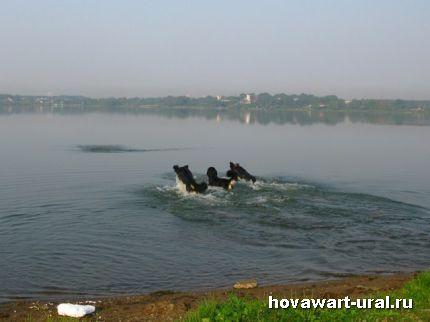 Хови - дельфинчики