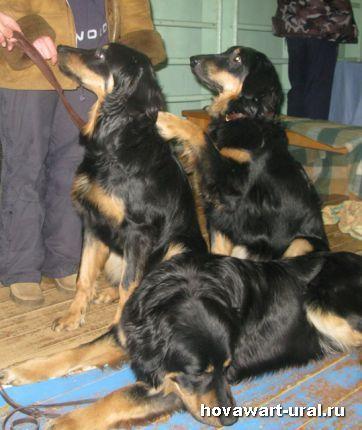 Нэтта (Алабама), Алиса (Африкана) и Макар