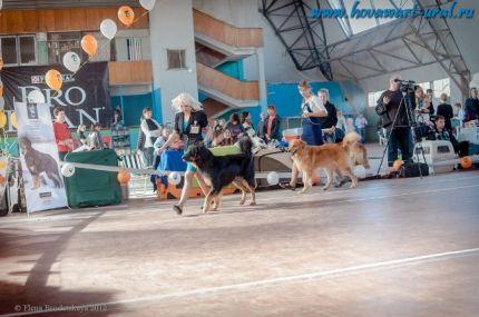 Чемпионат Клуба Ховавартов Украины, Харьков 2012, сравнение