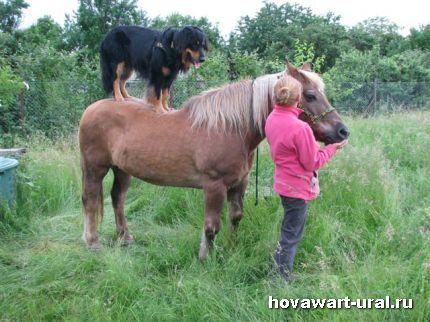 Идеальный альянс: Человек, лошадь и собака!!!