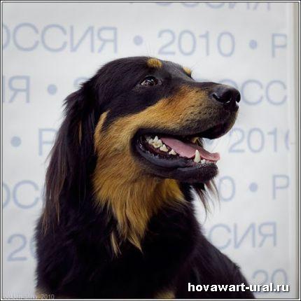 Россия - 2010. Анри
