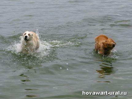 Солнце, воздух и вода - лучшие друзья ховавартов!