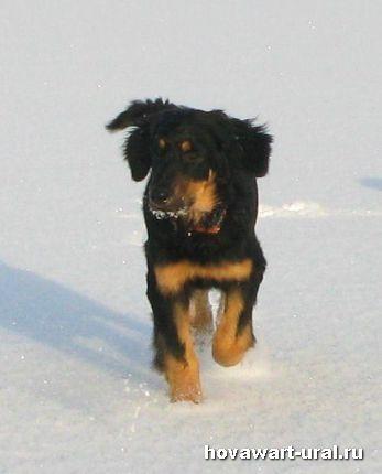 Рика впервые на льду!