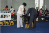 Ховаварт. Акелло на Worlddogshow 2012